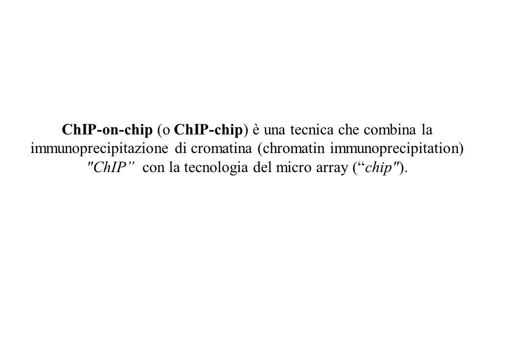 ChIP-on-chip (o ChIP-chip) è una tecnica che combina la immunoprecipitazione di cromatina (chromatin immunoprecipitation) ChIP con la tecnologia del micro array ( chip ).