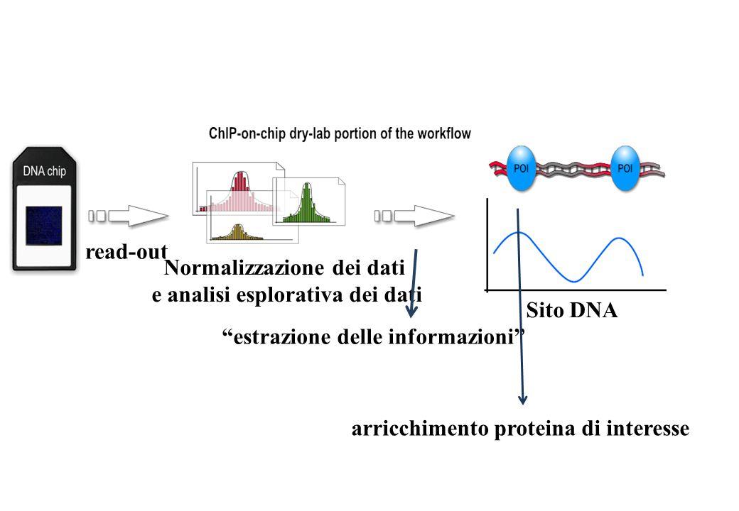 Normalizzazione dei dati e analisi esplorativa dei dati Sito DNA