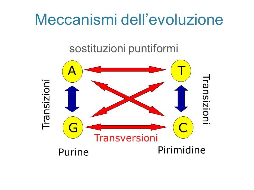 Meccanismi dell'evoluzione