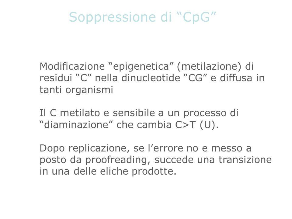 Soppressione di CpG Modificazione epigenetica (metilazione) di residui C nella dinucleotide CG e diffusa in tanti organismi.