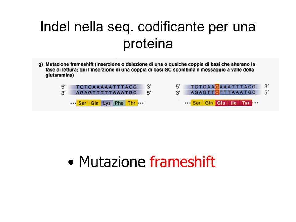 Indel nella seq. codificante per una proteina