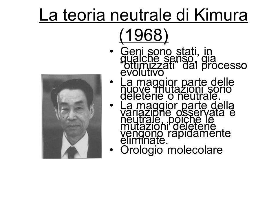 La teoria neutrale di Kimura (1968)