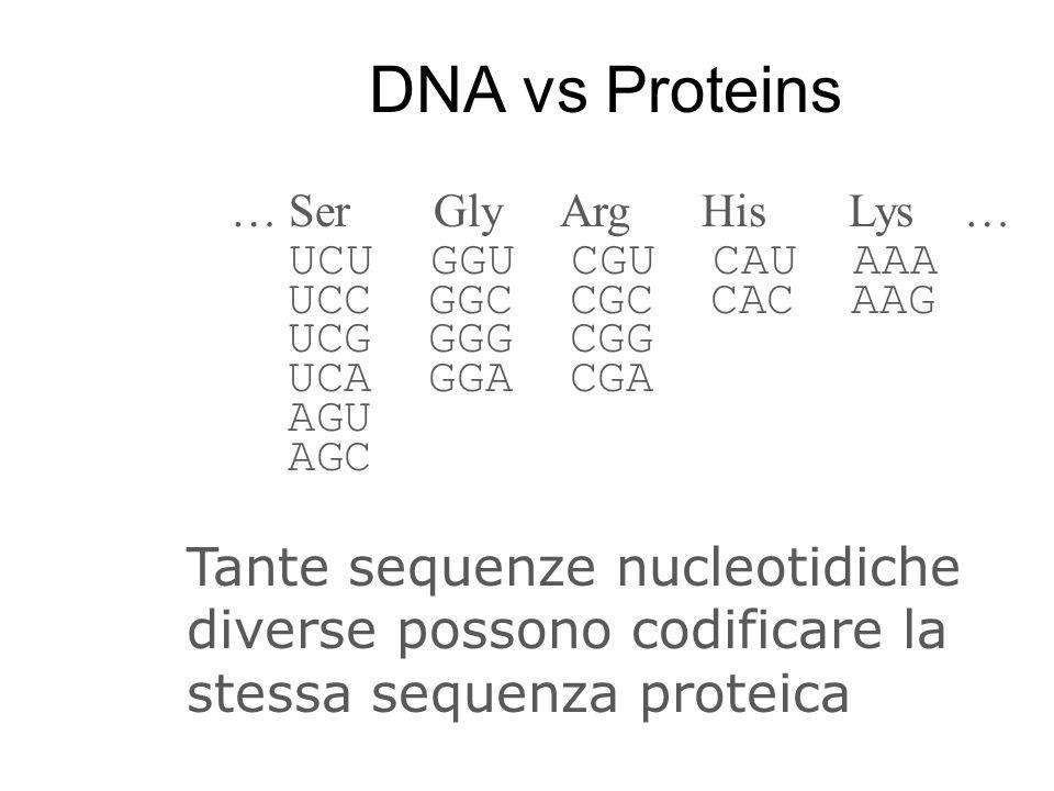 DNA vs Proteins … Ser Gly Arg His Lys … UCU GGU CGU CAU AAA. UCC GGC CGC CAC AAG.