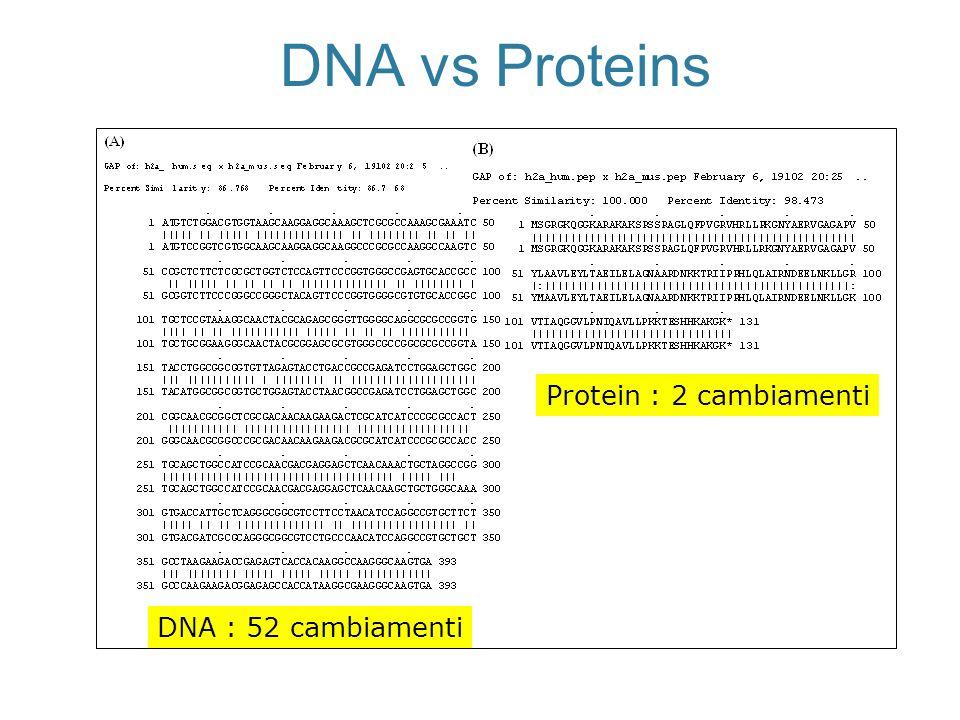 DNA vs Proteins Protein : 2 cambiamenti DNA : 52 cambiamenti
