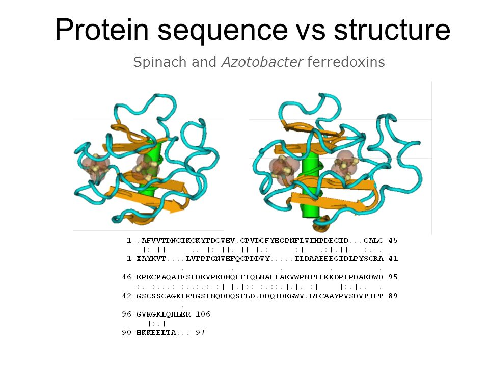 Protein sequence vs structure
