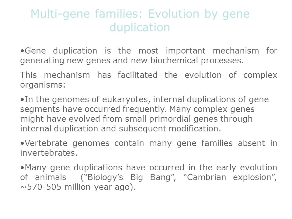 Multi-gene families: Evolution by gene duplication