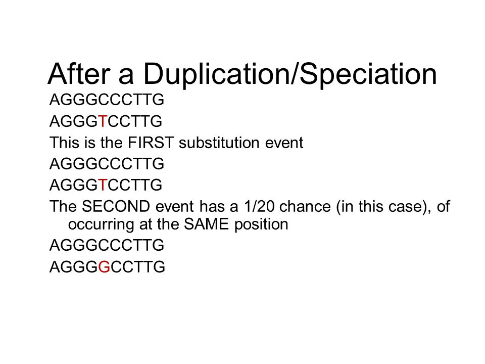 After a Duplication/Speciation