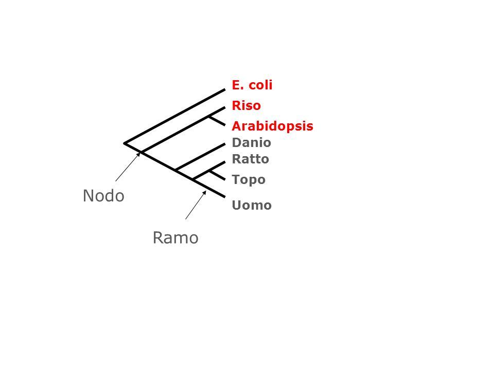 E. coli Riso Arabidopsis Danio Ratto Topo Nodo Uomo Ramo 59