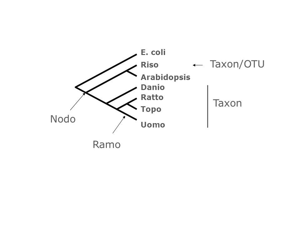 Taxon/OTU Taxon Nodo Ramo E. coli Riso Arabidopsis Danio Ratto Topo