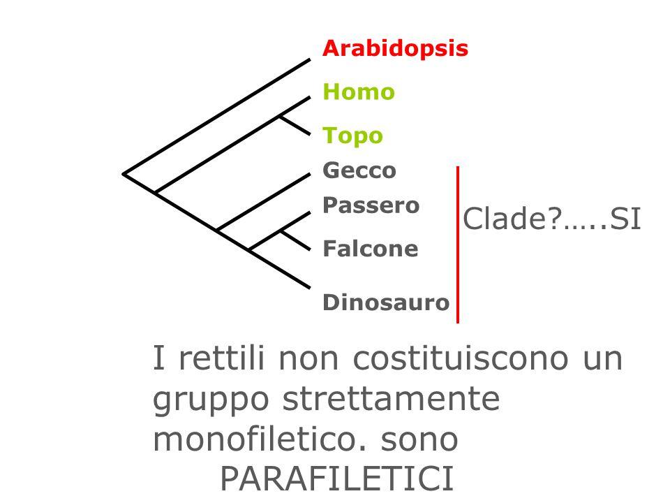 Arabidopsis Homo. Topo. Gecco. Passero. Clade …..SI. Falcone. Dinosauro.