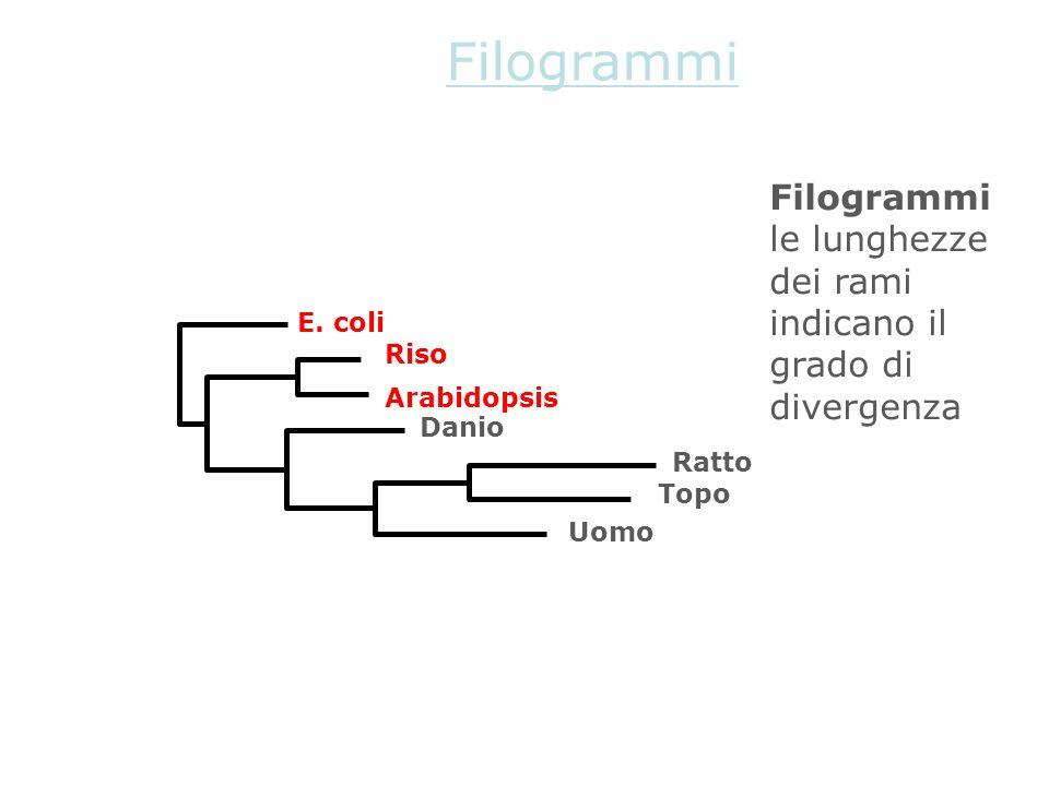 Filogrammi Filogrammi