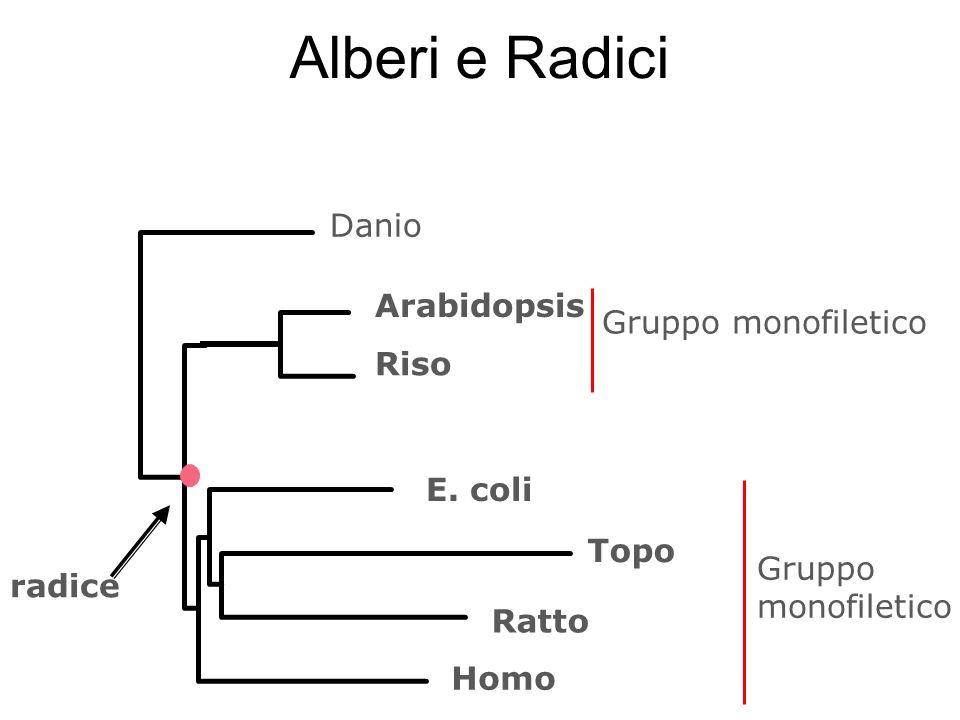 Alberi e Radici Danio Arabidopsis Gruppo monofiletico Riso E. coli