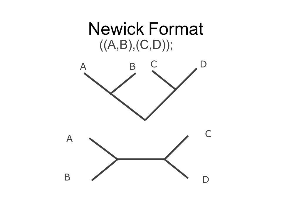 Newick Format ((A,B),(C,D)); C D A B C A B D