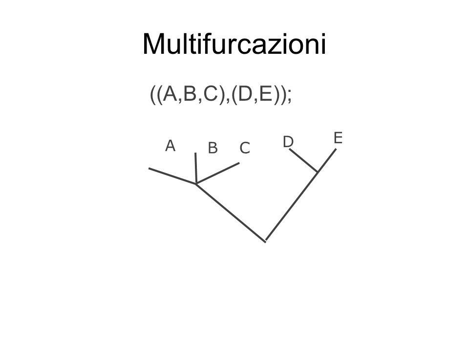 Multifurcazioni ((A,B,C),(D,E)); E D A B C
