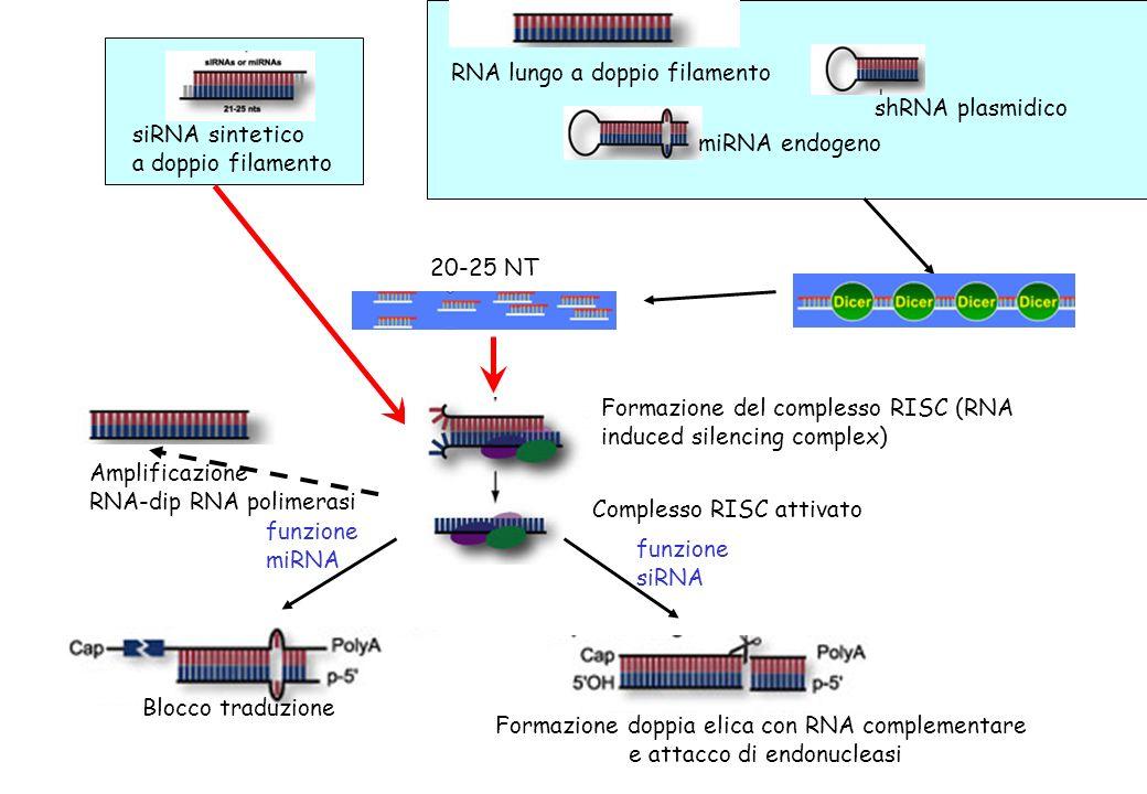 RNA lungo a doppio filamento