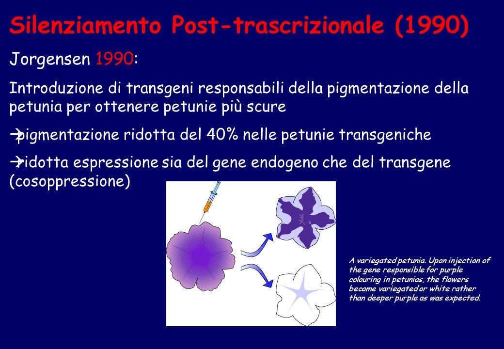 Silenziamento Post-trascrizionale (1990)