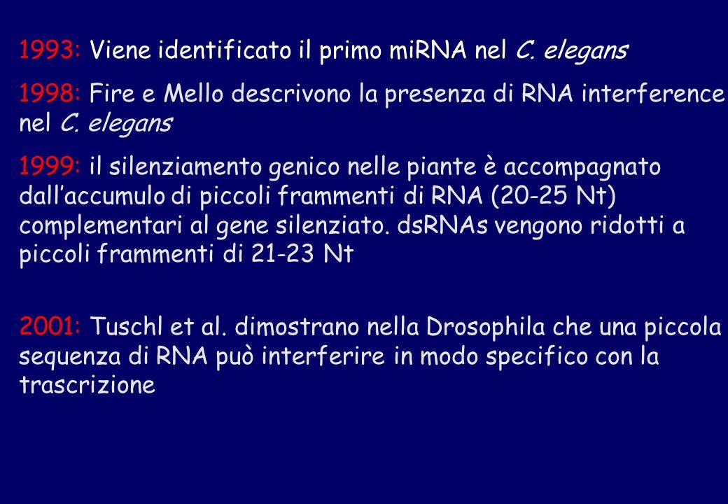 1993: Viene identificato il primo miRNA nel C. elegans