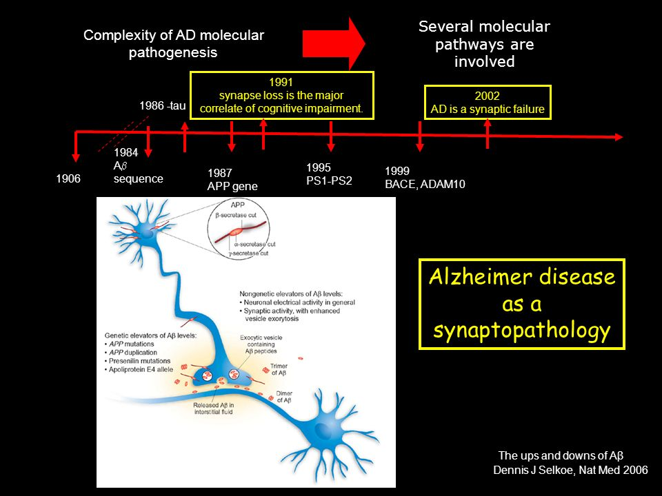 Alzheimer disease as a synaptopathology Several molecular