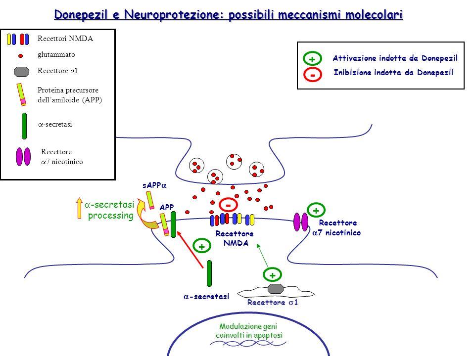 Donepezil e Neuroprotezione: possibili meccanismi molecolari