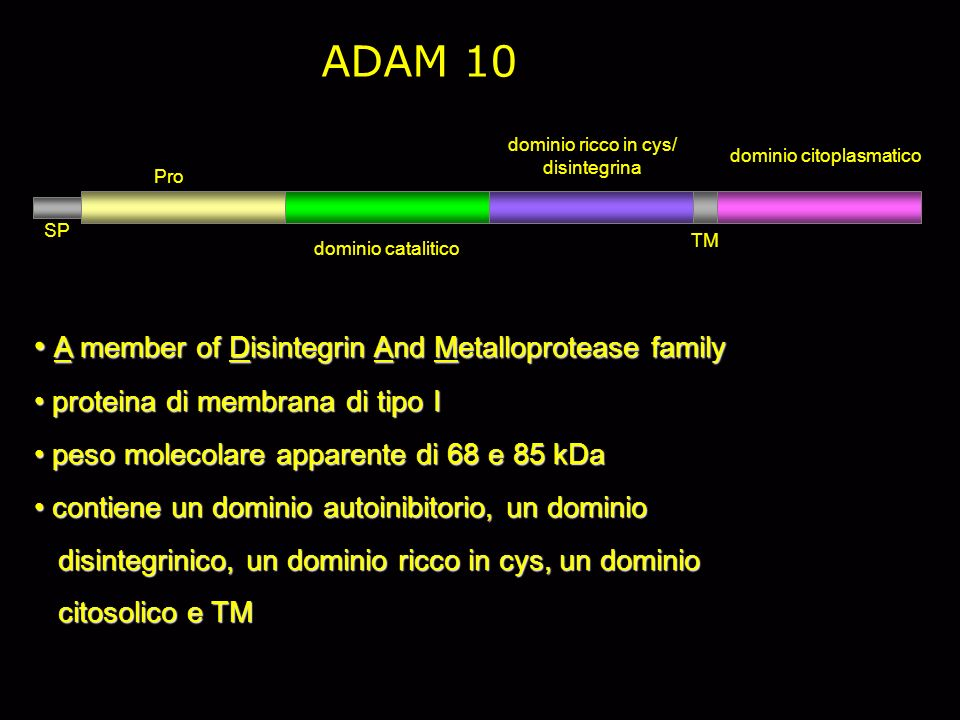 ADAM 10 A member of Disintegrin And Metalloprotease family