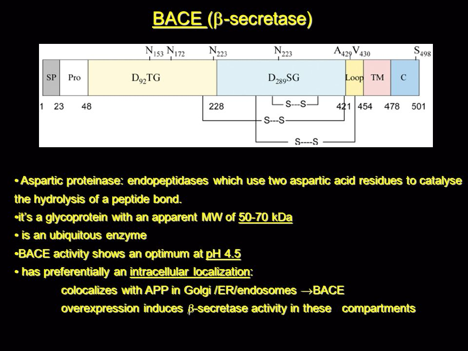 BACE (b-secretase) Aspartic proteinase: endopeptidases which use two aspartic acid residues to catalyse the hydrolysis of a peptide bond.