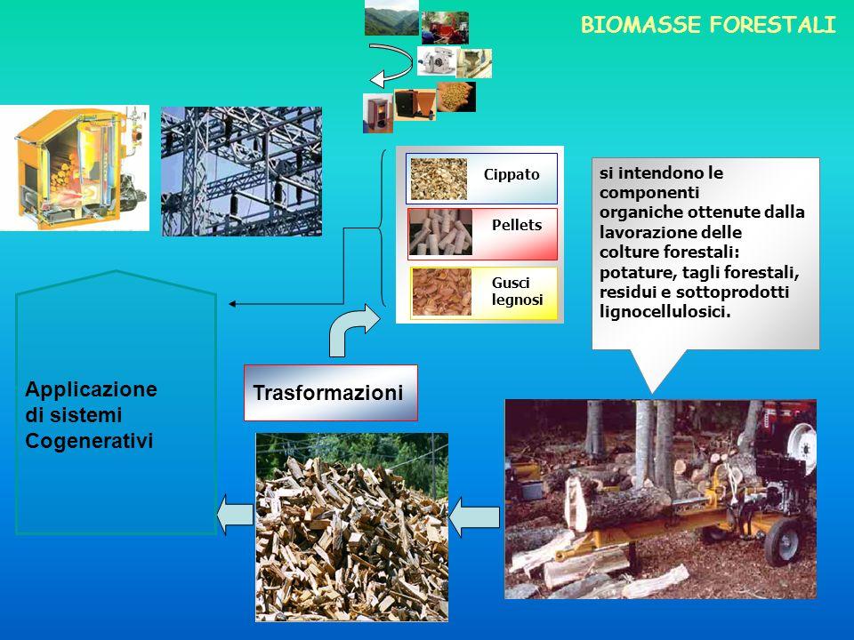 BIOMASSE FORESTALI Applicazione di sistemi Cogenerativi Trasformazioni