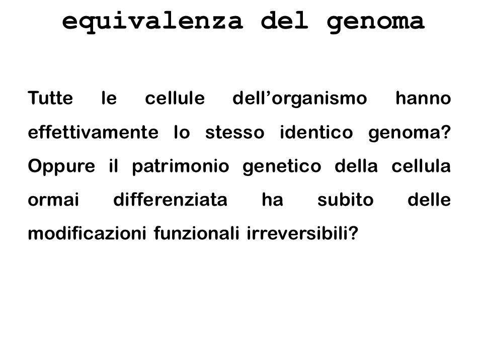 equivalenza del genoma