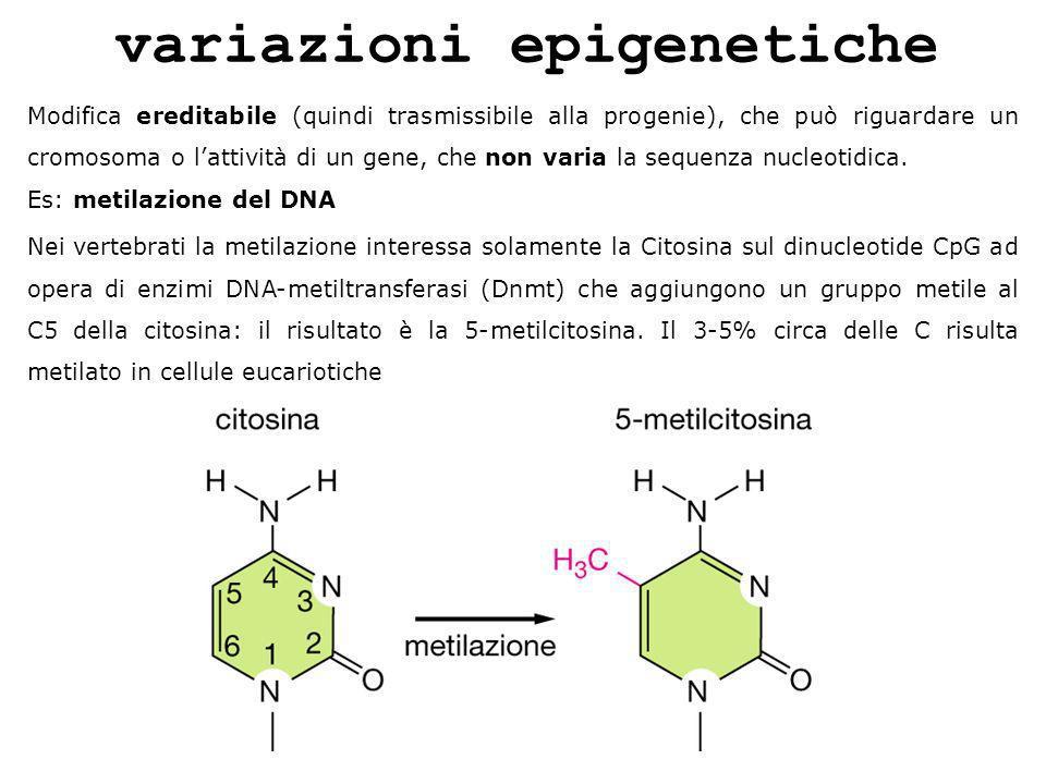 variazioni epigenetiche