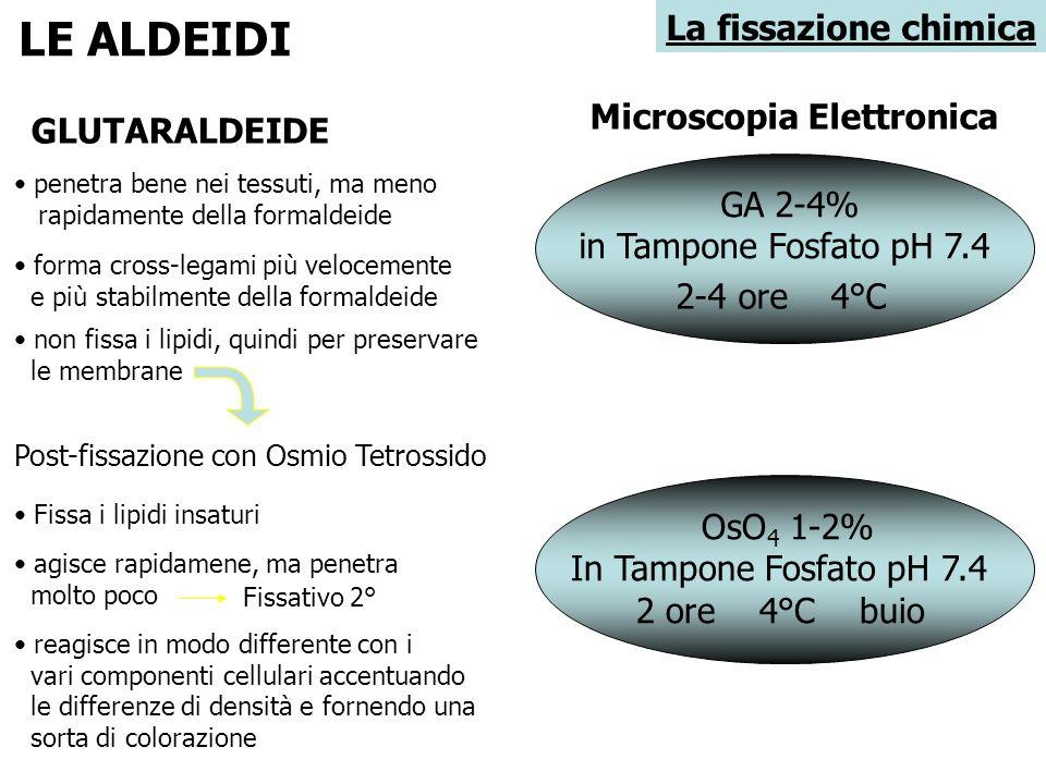 LE ALDEIDI La fissazione chimica Microscopia Elettronica GLUTARALDEIDE
