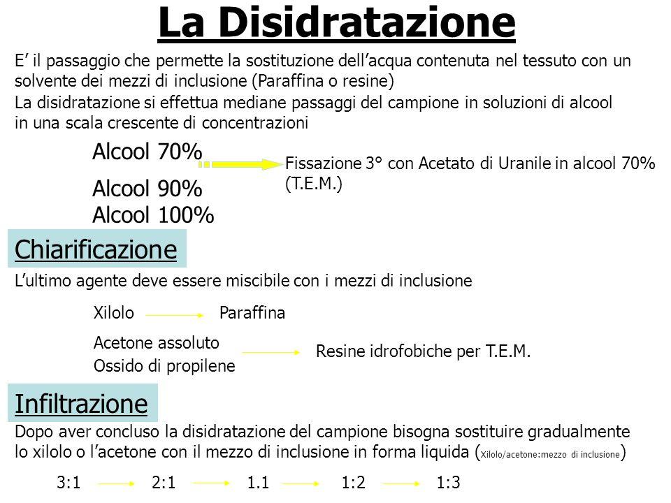 La Disidratazione Chiarificazione Infiltrazione Alcool 70% Alcool 90%