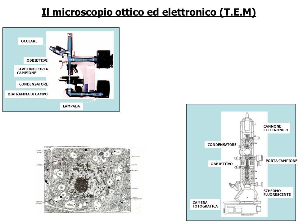 Il microscopio ottico ed elettronico (T.E.M)