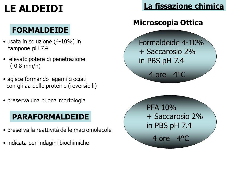 LE ALDEIDI La fissazione chimica Microscopia Ottica FORMALDEIDE