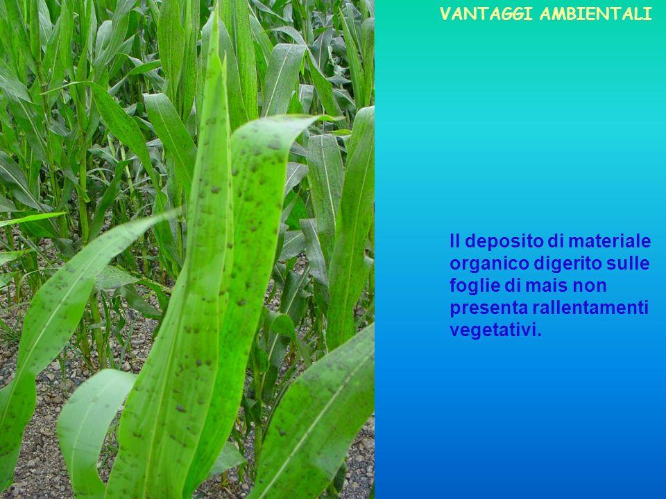 VANTAGGI AMBIENTALI Il deposito di materiale organico digerito sulle foglie di mais non presenta rallentamenti vegetativi.