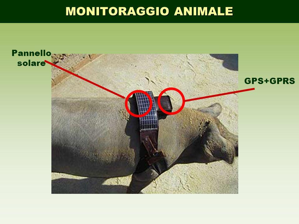 MONITORAGGIO ANIMALE Pannello solare GPS+GPRS