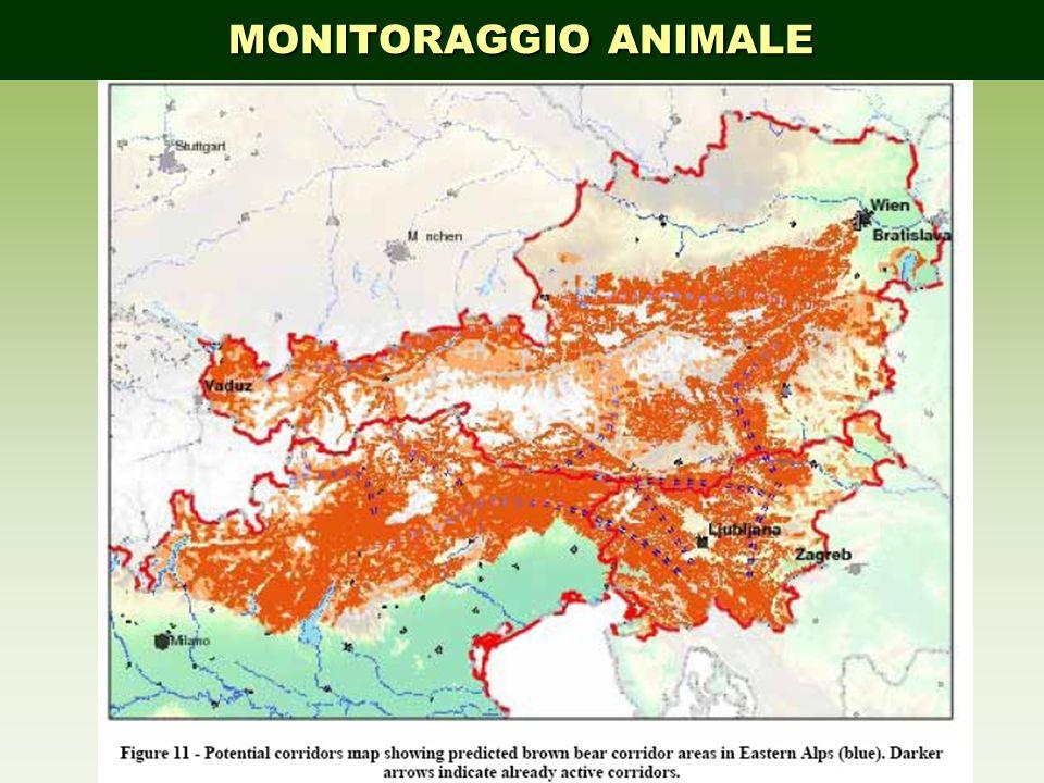 MONITORAGGIO ANIMALE