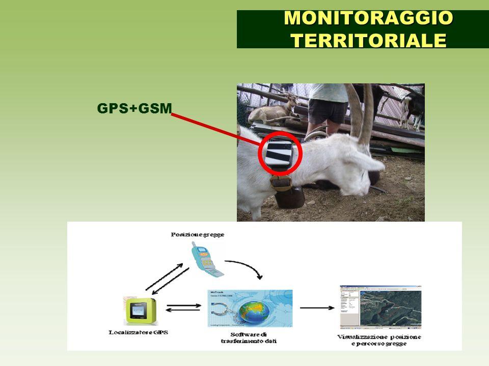 MONITORAGGIO TERRITORIALE