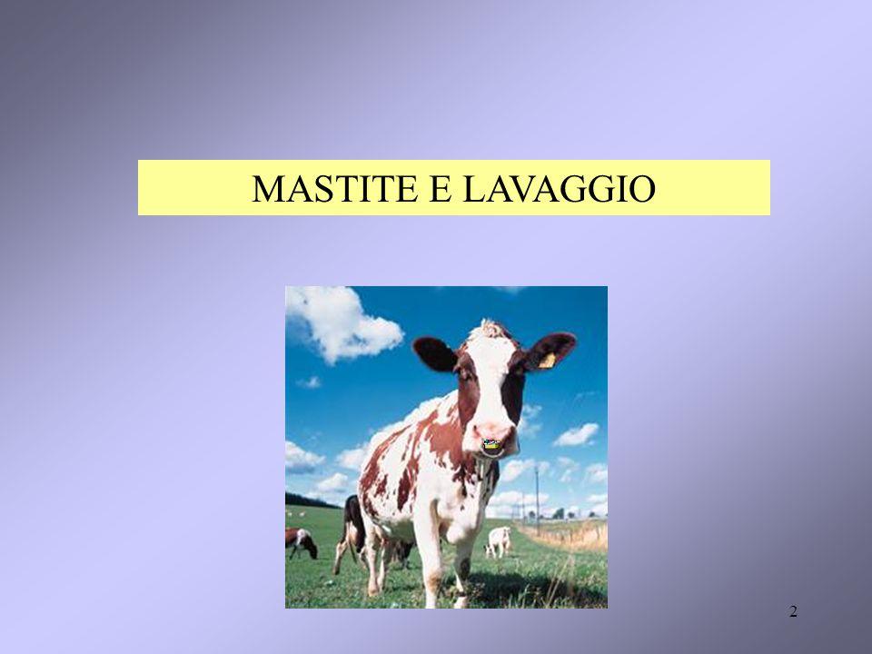 MASTITE E LAVAGGIO