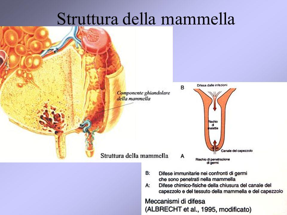 Struttura della mammella