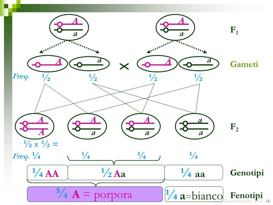 ¾ A = porpora ¼ a=bianco ¼ AA ½ Aa ¼ aa ½ ½ x ½ = ¼ ¼ ¼ ¼ A a A a F1