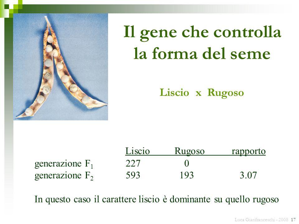 Il gene che controlla la forma del seme