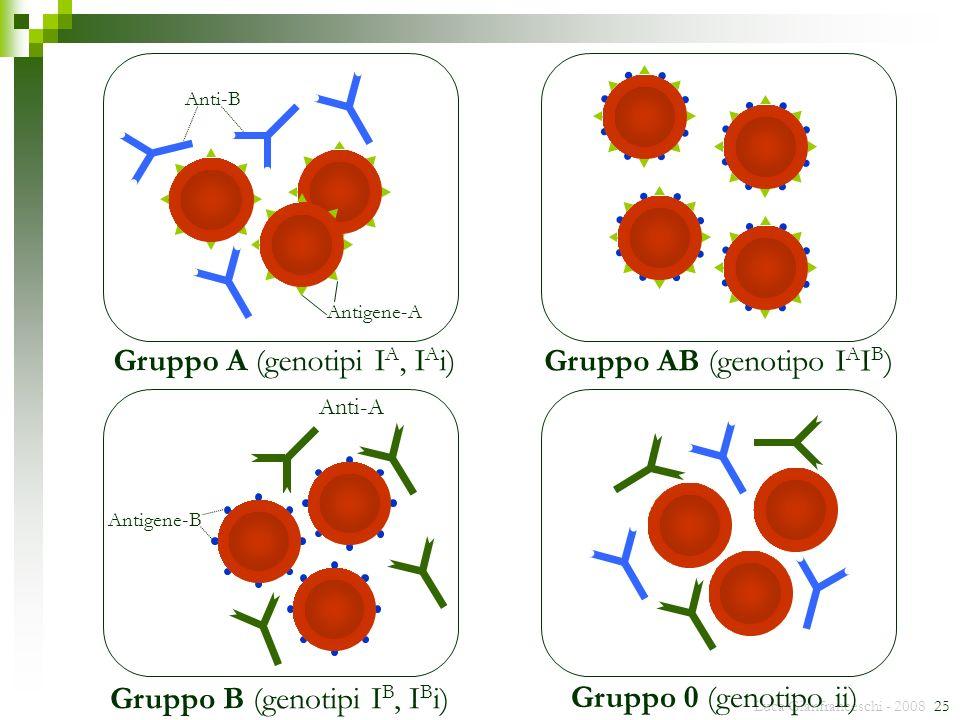 Gruppo AB (genotipo IAIB) Gruppo A (genotipi IA, IAi)