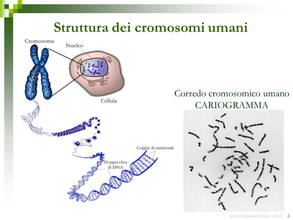 Struttura dei cromosomi umani