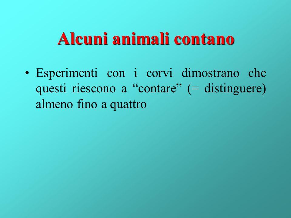 Alcuni animali contano