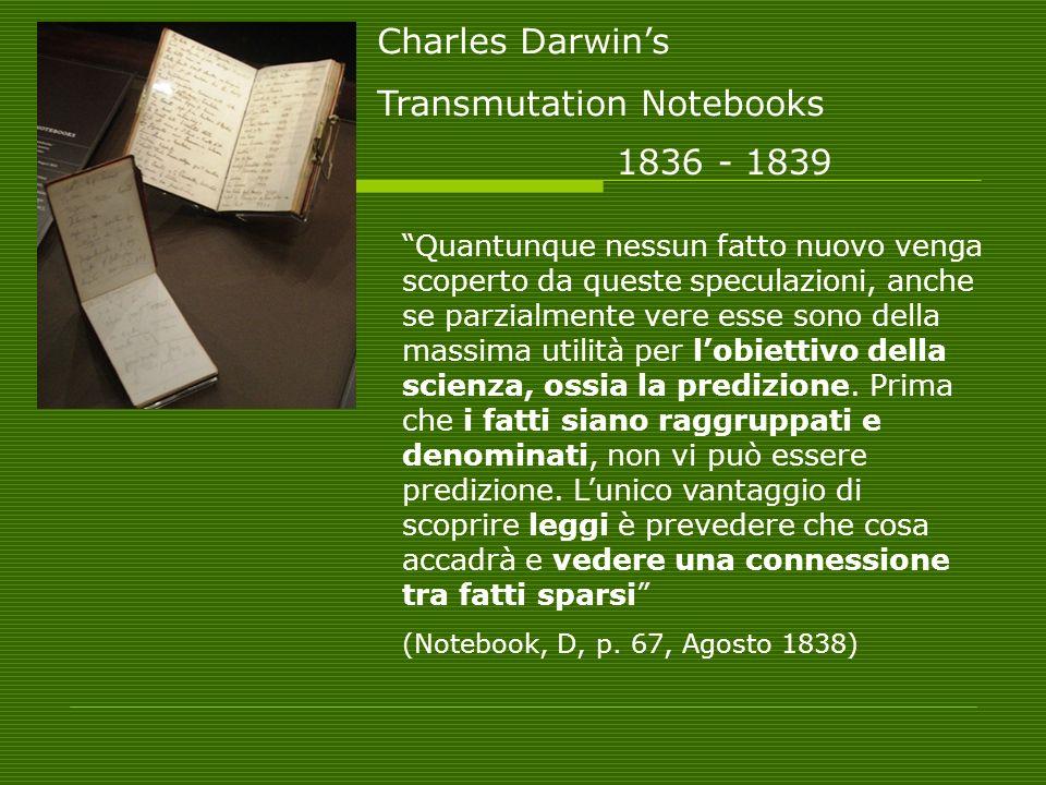 Transmutation Notebooks