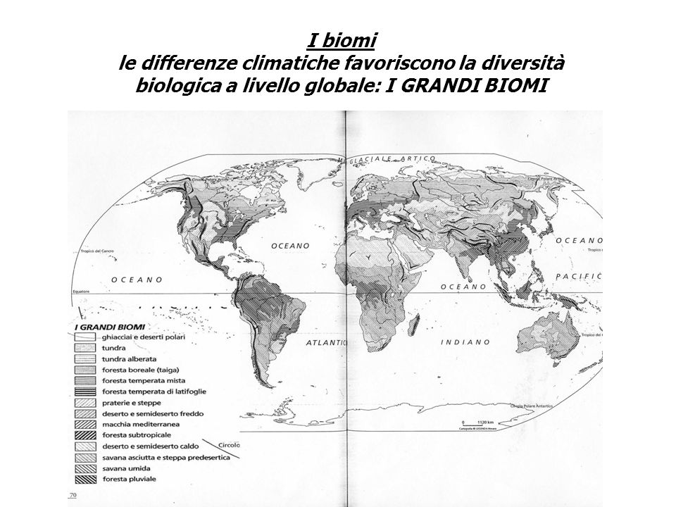 I biomi le differenze climatiche favoriscono la diversità biologica a livello globale: I GRANDI BIOMI.