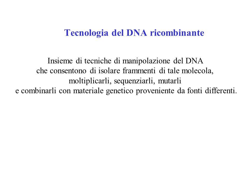 Tecnologia del DNA ricombinante