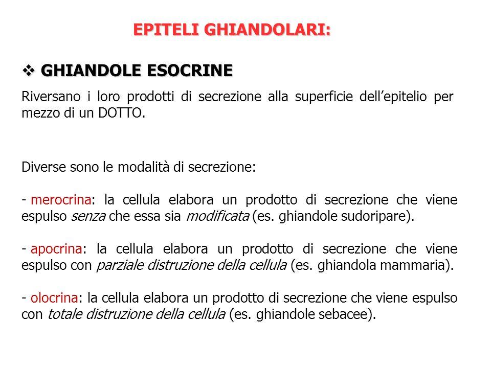 EPITELI GHIANDOLARI: GHIANDOLE ESOCRINE