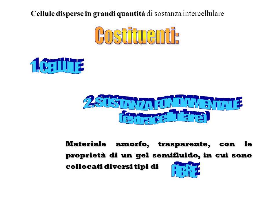 2 . SOSTANZA FONDAMENTALE