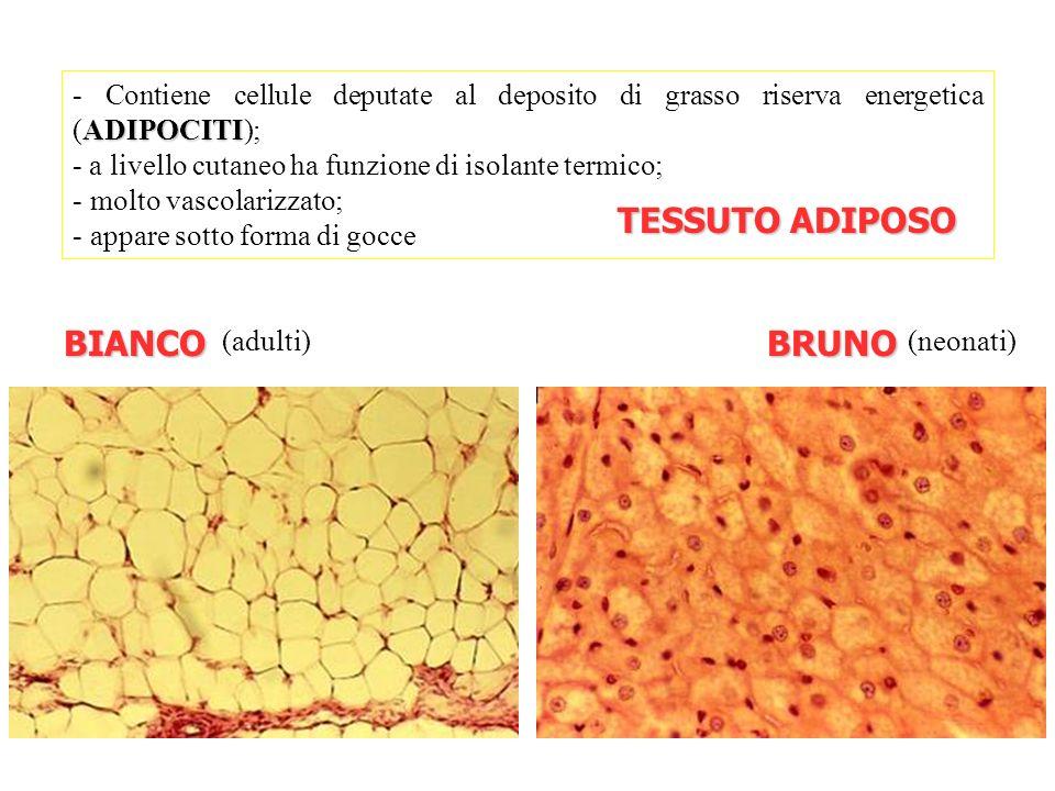 Organizzazione del corpo umano ppt scaricare for Tessuto isolante termico