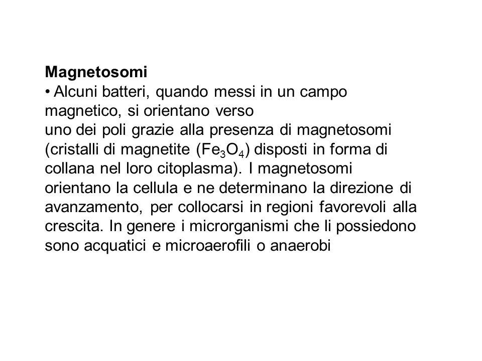Magnetosomi• Alcuni batteri, quando messi in un campo magnetico, si orientano verso.